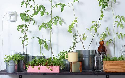 Розмарин, мангольд и другая полезная трава: что можно вырастить на окне