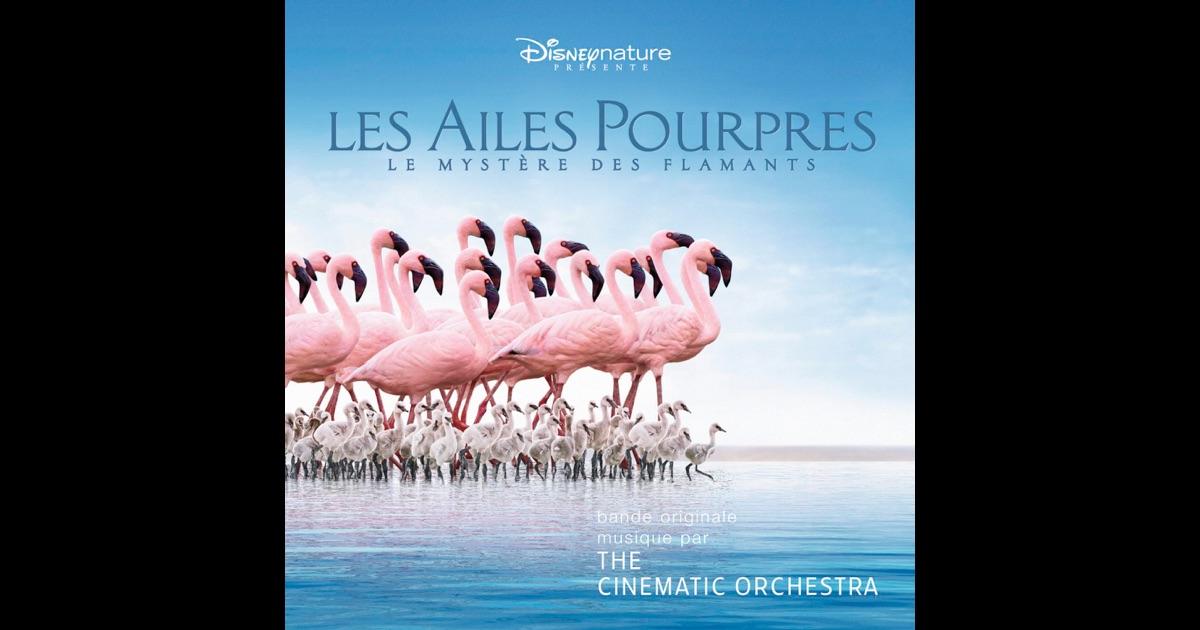 The Cinematic Orchestra - Wikipedia