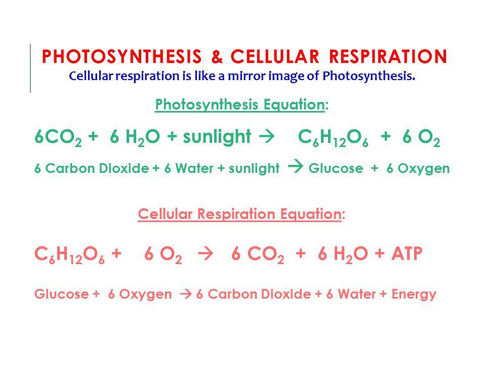 Symbol Equation For Photosynthesis And Respiration Tessshebaylo
