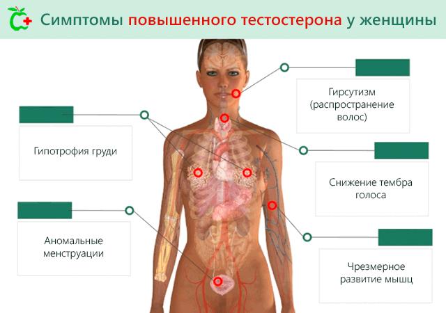 Тестостерон ниже нормы у женщин причины