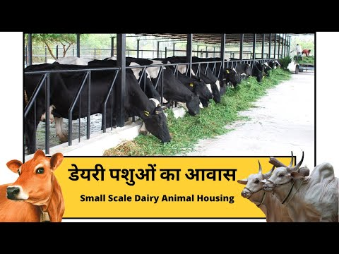Buffalo loan in rajasthan