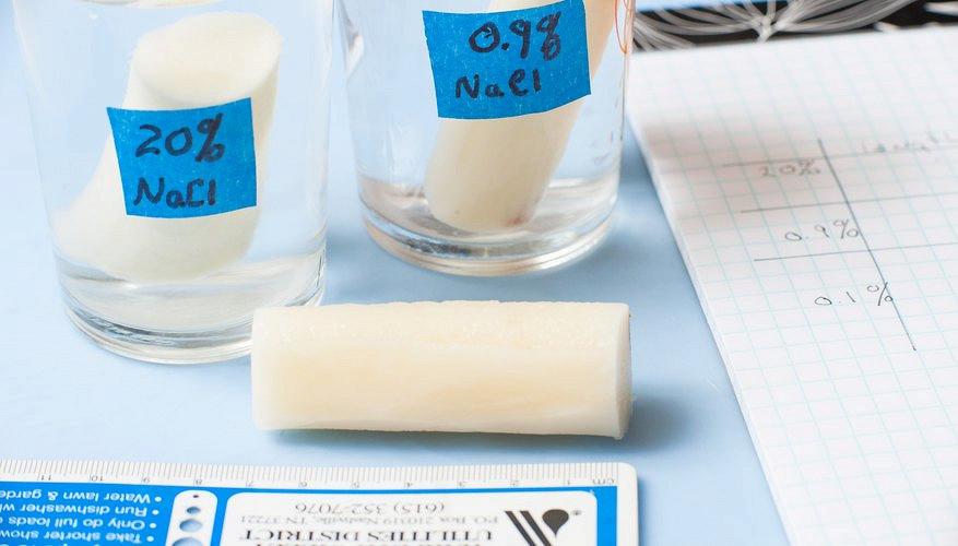 Lab Report Osmosis - Osmosis - Chemistry - Scribd