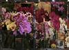Цветы-2012