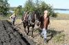 Традиционное земледелие Олонецкой губернии конца XIX — начала XX веков