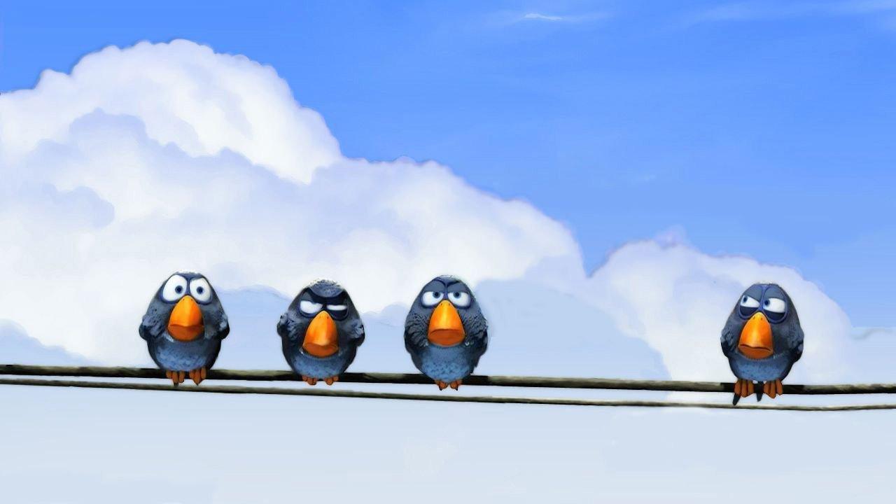 О птичках смотреть фото