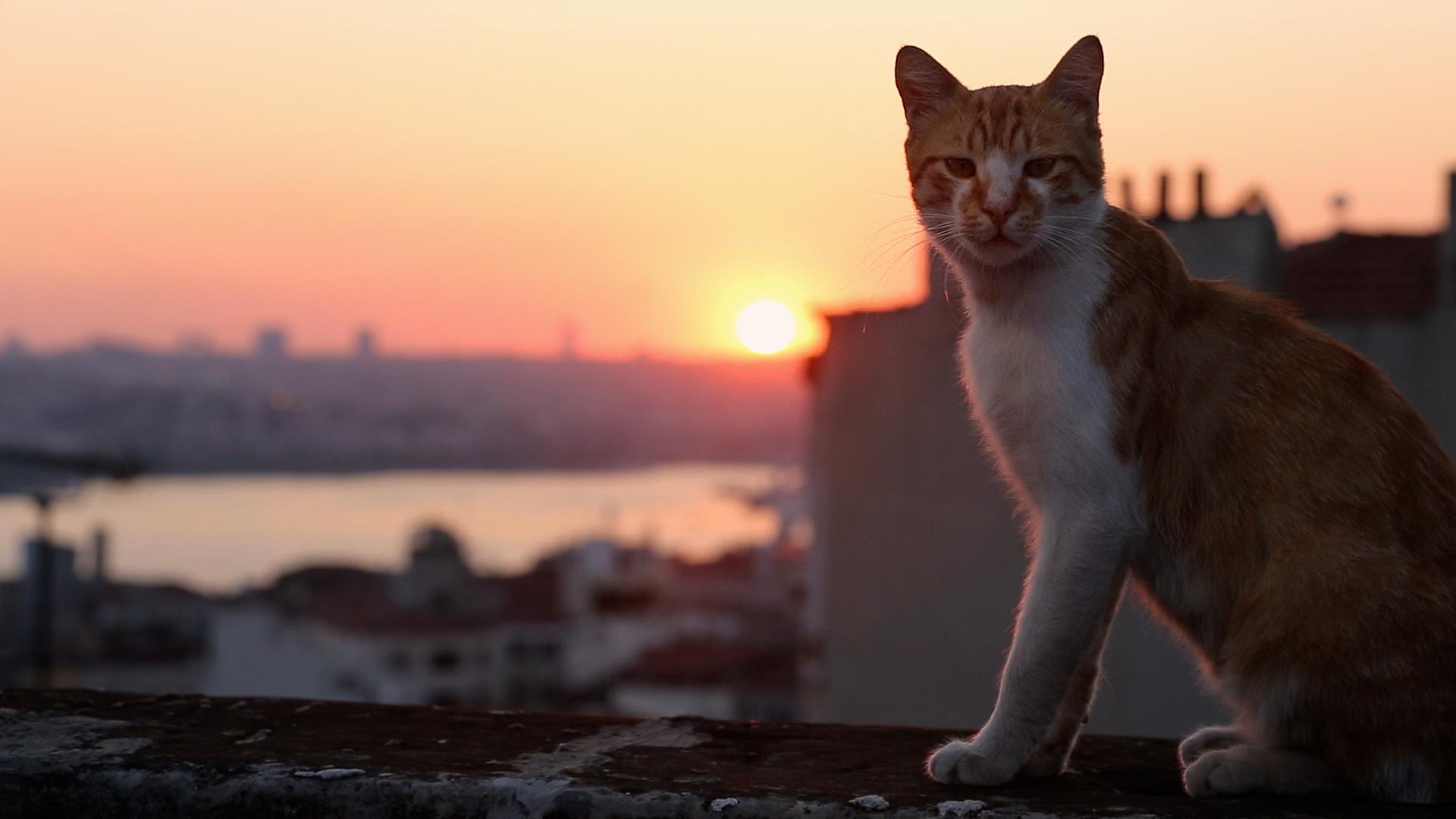Город кошек смотреть фото