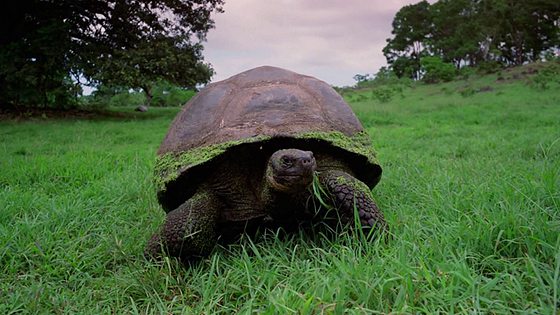 Галапагосы 3D (Galapagos: The Enchanted Voyage)