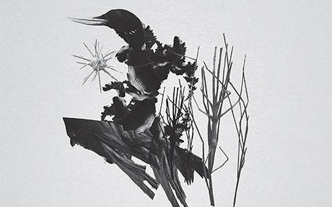 «Metamorphosis» Ромы Литвинова (Mujuice)
