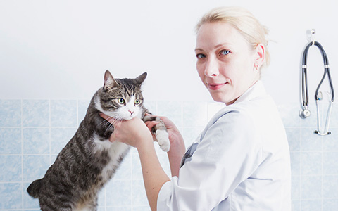 Московские ветеринары рассказывают о своих питомцах