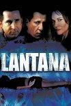 Лантана / Lantana