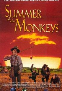 Неприятности с обезьянками