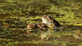 XV Международный фестиваль дикой природы «Золотая черепаха-2021»