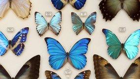 Эстетика и богатство мира насекомых