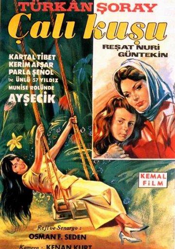 Тюркан Шорай (Türkân Şoray) – Актриса: фильмография, биография ...