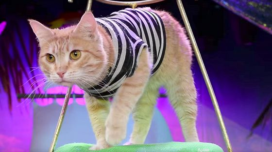 Коты-мореходы