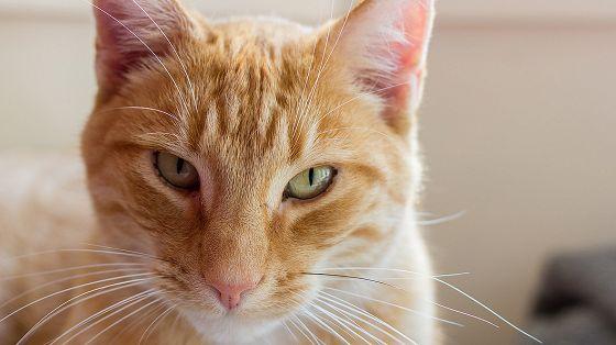 Международная выставка кошек «Киномявр»