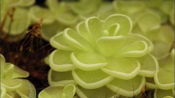 Выставка хищных растений