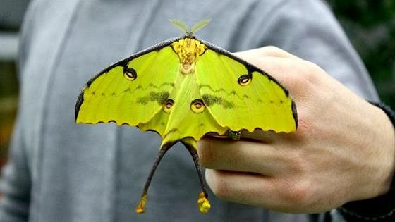 Выставка живых тропических бабочек