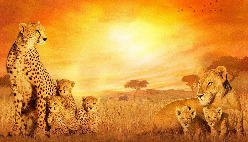 Кино: «Африканские кошки: Королевство смелых»