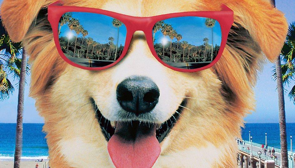 Кино: «Мой пес Бинго»