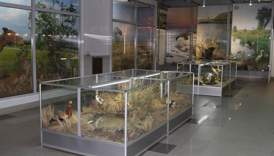 Выставки: Природа Волгоградской области