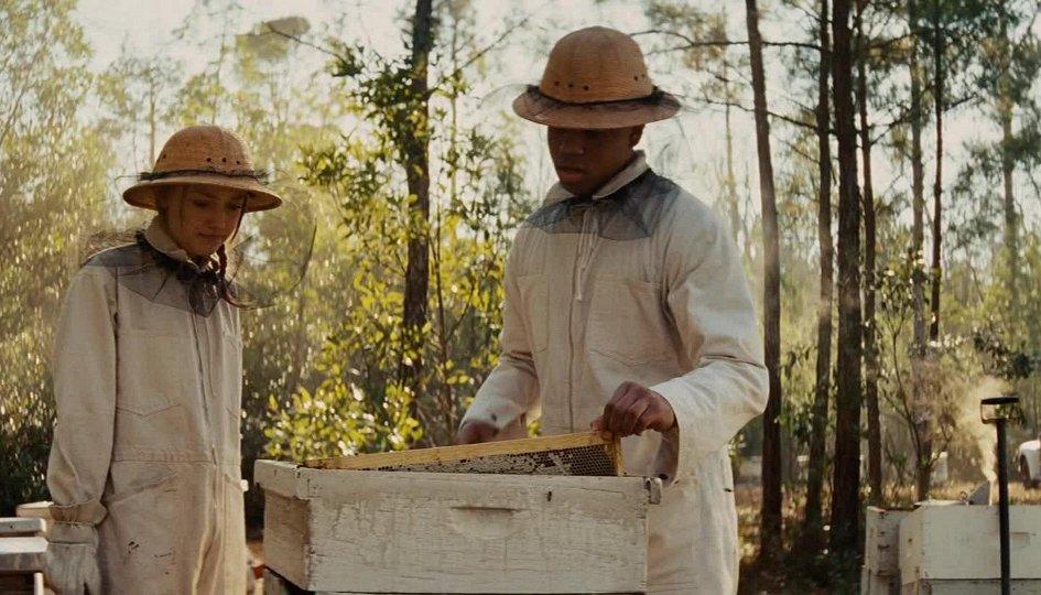 Кино: «Тайная жизнь пчел»