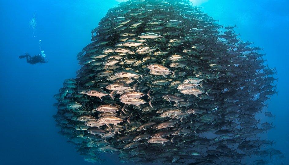 Выставки: V Фестиваль подводной фотографии «Дикий подводный мир-2019»