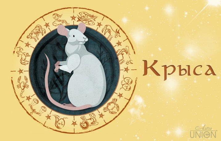Гороскоп крыса телец женщи  характеристика