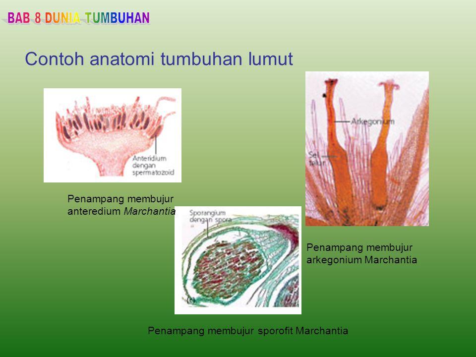 Anatomi Sel Hewan - ahonesyes