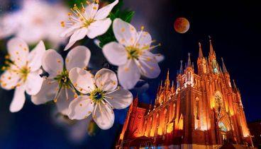 Душа абрикосового дерева